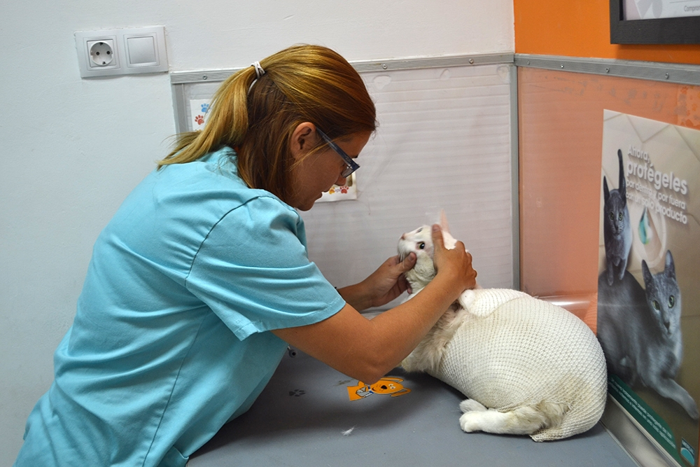 consulta veterinario